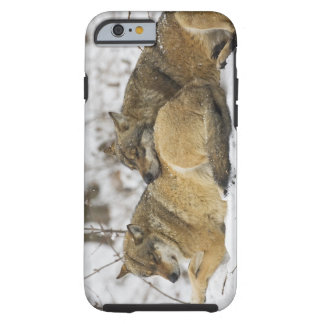 Wolves in the Bawarian Wood Tough iPhone 6 Case