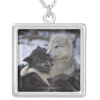 Wolves in the Snow | Montana, USA Silver Plated Necklace