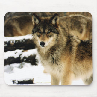 Wolves in The Snow Mouse Mat