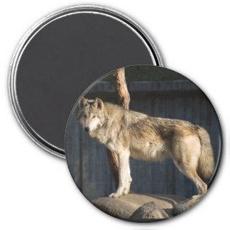 Wolves Magnet