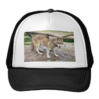 Wolves Wolf Hat
