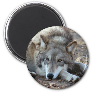 Wolves Wolf Magnet