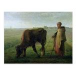 Woman Grazing her Cow, 1858 Postcard
