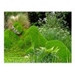 Woman of Grass Postcards