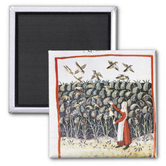 Woman Protecting her Crop of Millet Refrigerator Magnet