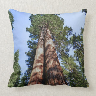 Woman videotaping at base of massive Sequoia Pillow