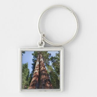 Woman videotaping at base of massive Sequoia Keychain