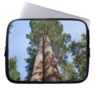 Woman videotaping at base of massive Sequoia Laptop Computer Sleeve