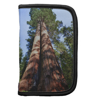 Woman videotaping at base of massive Sequoia Folio Planner