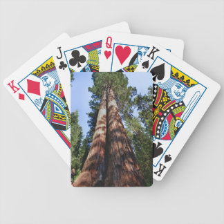 Woman videotaping at base of massive Sequoia Card Deck