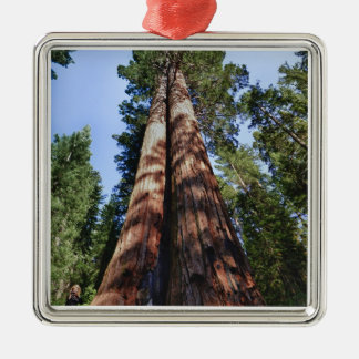 Woman videotaping at base of massive Sequoia Silver-Colored Square Decoration