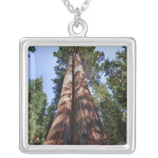 Woman videotaping at base of massive Sequoia Silver Plated Necklace
