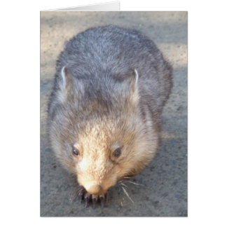 Wombat Greeting Card
