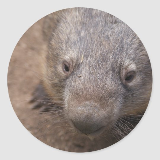 Wombat Kiss Round Sticker