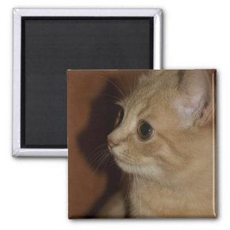 wonder square magnet