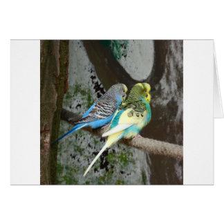 Wonderful Budgie Bird Card