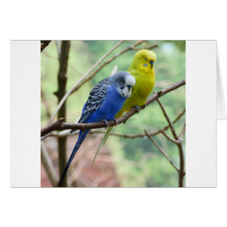 Wonderful Budgie Card