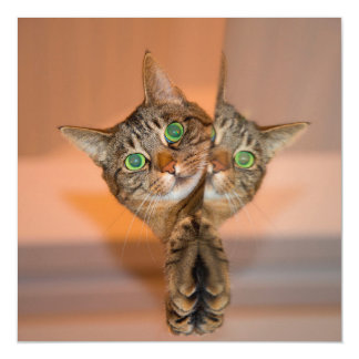 Wonderful Cat Magnetic Invitations