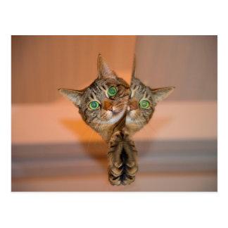 Wonderful Cat Postcard