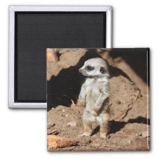 Wonderful Cute Sweet African Meerkat Animal Square Magnet