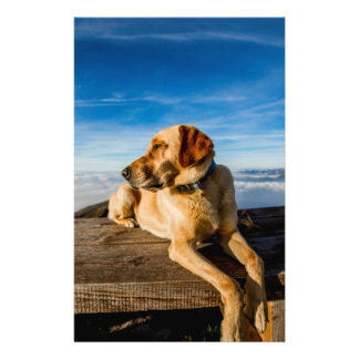 Wonderful Dog 14 Cm X 21.5 Cm Flyer