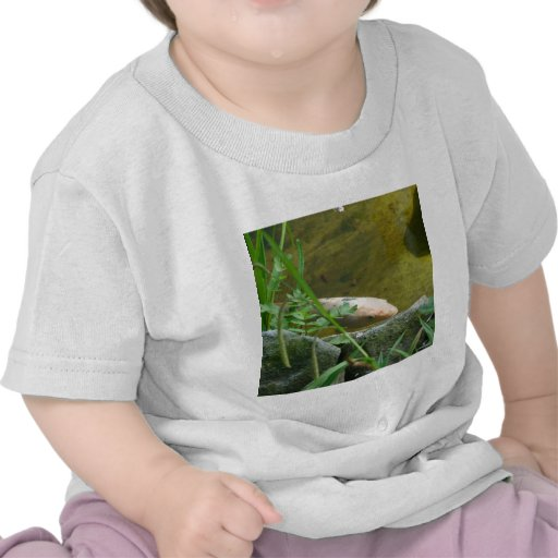 Wonderful Koi T-shirts