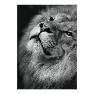 Wonderful Lion 9 Cm X 13 Cm Invitation Card