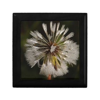 Wonderful Macro Dandelion Trinket Box
