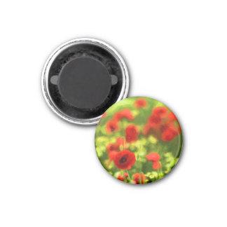 Wonderful poppy flowers VI - Wundervolle Mohnblume 3 Cm Round Magnet