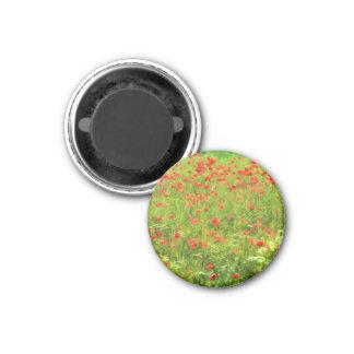 Wonderful poppy flowers VII - Wundervolle Mohnblum 3 Cm Round Magnet