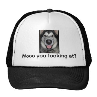 Woo you looking at. Alaskan malamute Cap