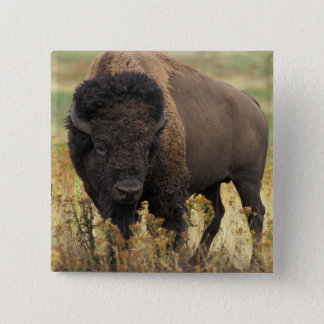 Wood Bison Square Pin