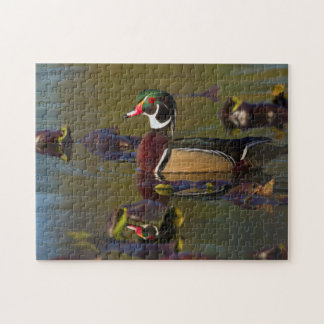 Wood Duck Drake 1 Jigsaw Puzzle