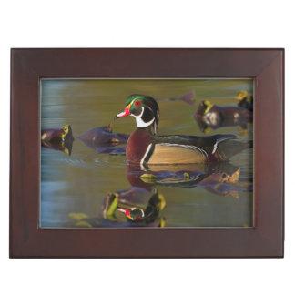 Wood Duck Drake 1 Keepsake Box