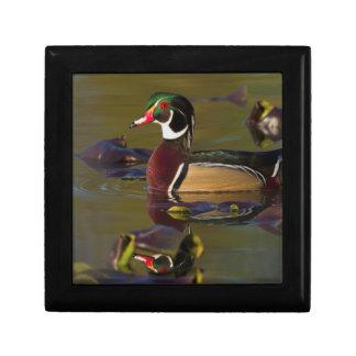 Wood Duck Drake 1 Small Square Gift Box