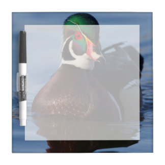 Wood Duck Drake 2 Dry Erase Board