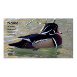 Wood Duck Drake Pack Of Standard Business Cards