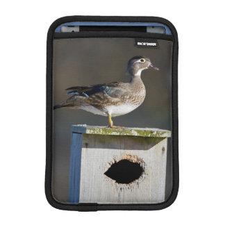 Wood Duck female on nest box in wetland iPad Mini Sleeve