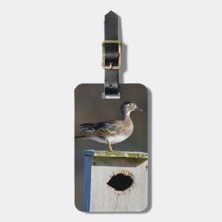 Wood Duck female on nest box in wetland Luggage Tag