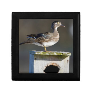 Wood Duck female on nest box in wetland Small Square Gift Box