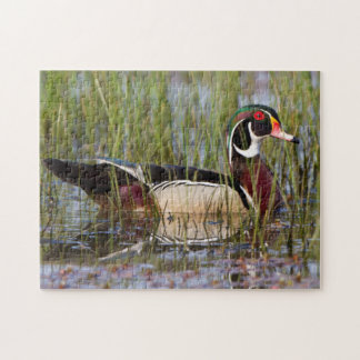 Wood Duck in wetland Jigsaw Puzzle
