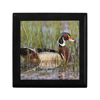 Wood Duck in wetland Small Square Gift Box