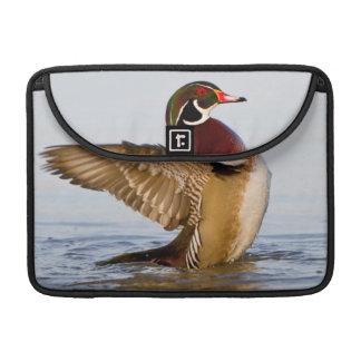 Wood Duck male flapping wings in wetland Sleeve For MacBook Pro