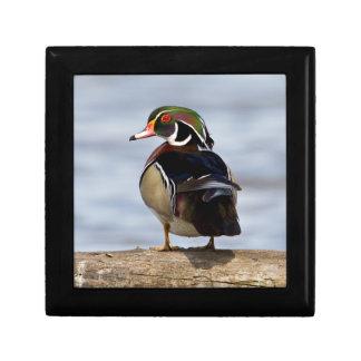 Wood Duck male on log in wetland Gift Box