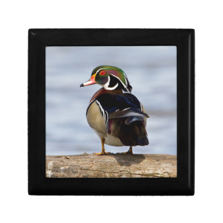 Wood Duck male on log in wetland Small Square Gift Box