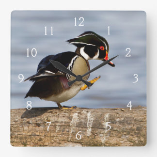 Wood Duck on log in wetland Square Wall Clock