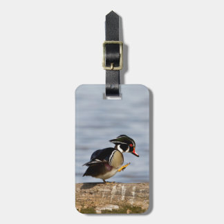 Wood Duck on log in wetland Tags For Luggage