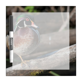 Wood Duck Resting Dry Erase Board