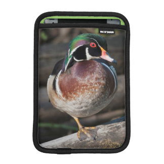 Wood Duck Resting iPad Mini Sleeve