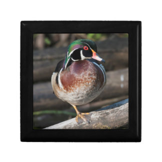 Wood Duck Resting Small Square Gift Box